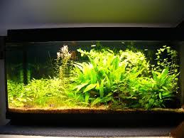 ph aquarium eau douce aquarium eau douce guppy