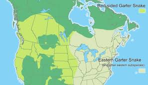 Current Range Map For The Red Sided And Eastern Garter Snakes