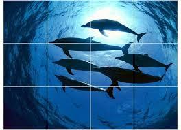 dolphin photo bathroom shower tile mural 1468 style tile