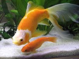 quels poissons choisir pour un petit aquarium aquariums et