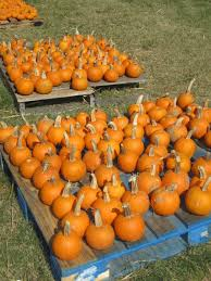 Pumpkin Patch Baton Rouge by Pumpkin Patch At First Presbyterian In New Orleans Benefits Many