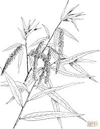 Click The Babylon Willow Or Weeping Branch Coloring Pages