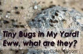 Tiny Bugs - YouTube How To Keep Mosquitoes Away Geting Rid Of Five Tips For Getting Bugs And Pests On Your Patio Youtube To Get Chiggers Skin Body Yard Symptoms Fast Crawly Catures In My Backyard Alberta Home Gardening 25 Unique Rid Spiders Ideas Pinterest Kill Off Bug Control I Repellent Spiders Spider Spray Sprays Cutter 16 Oz Outdoor Foggerhg957044 The Of Time Tested Bob Vila Pictures With Japanese Beetles Garden Best Indoor Mosquito Killers Insect Cop