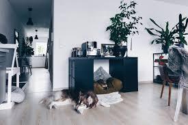 diy hundehütte für die wohnung selber bauen inklusive
