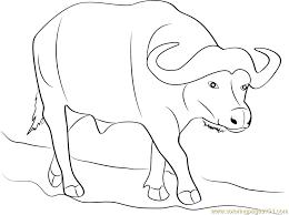 Wild Buffalo Coloring Page