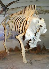 Agate Fossil Beds by Secrets Of The Most Sincerely Dead Agate Fossil Beds National