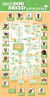 Shed Free Lap Dogs by Top 10 Most Affectionate Dog Breeds