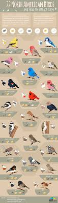 22 Popular North American Birds #Infographic | Birds, Infographic ... Introduced Birds Birds In Backyards Best 25 Bird Watching Ideas On Pinterest Pretty Backyard 510 Best Birds Of A Feather Images Blackwinged Stilt 2016 Results Aussie Count Rainbow Lorikeet Evolve Their Behavior Without Chaing Bodies The To Feed Or Not To Audubon Female Blackbird Front Yard And Landscaping Ideas Designs Country Garden Striped Honeyeater Inland E Australia My