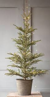 Types Of Christmas Trees To Plant by Best 25 Real Xmas Trees Ideas On Pinterest Lowes Christmas