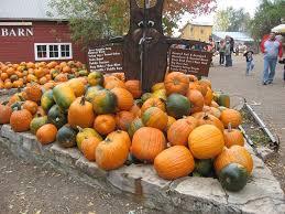 Pumpkin Patch Reno by Pick Your Own Pumpkin Patches In Nebraska Funtober