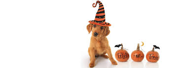 Safe Halloween Bakersfield 2013 by Spca For Monterey County Adopt Rescue Donate