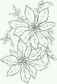 Poinsettia Flower Coloring Page From Category Select 27115 Printable Crafts Of Cartoons Nature Animals Bible And Many More