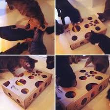 fun for cats i cut circles in a small shallow box put their