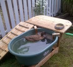 Horse Trough Bathtub Diy by Duck Deck Backyard Duck Habitat With Pictures