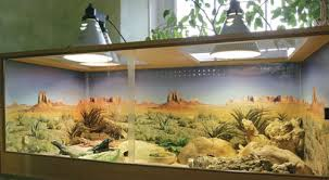 Reptile Heat Lamps Safety by Reptile Lighting Information