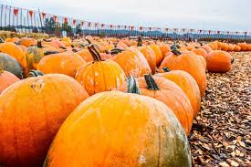 Pumpkin Patch Spring Tx by 5 Pumpkin Patches In Dfw To Visit This Fall Her Campus