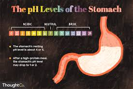 100 Ph Of 1 What Is The PH Of The Stomach