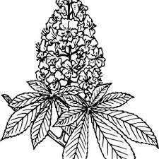 Beautiful Lilac Flower Coloring Page