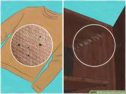 4 Ways to Get Rid of Moths wikiHow
