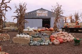 Pumpkin Patch Fresno Ca Hours by Find Corn Mazes In Turlock California Pumpkin Patch Turlock In