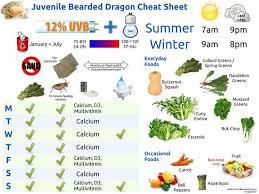113 best bearded dragons images on pinterest bearded dragon