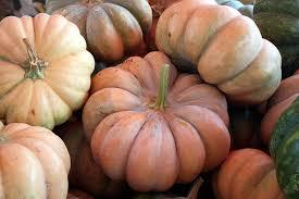 Pumpkin Picking Long Island Ny by Long Island Cheese Pumpkin Project Jason Foscolo Pllc Legal