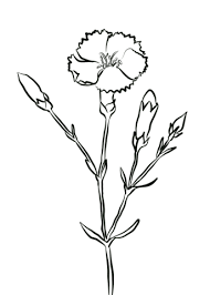 Click To See Printable Version Of Crimson Carnation Coloring Page