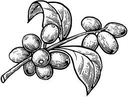Coffee Plant Clipart Black And White 7