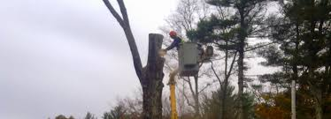 Barnes Tree Service Tree Care & Removal Southeastern, MA Oregons Best Hot Springs Outdoor Project Hiking Austin Maguire Austinmaguire Twitter Barnes Protection Services Inc Linkedin Criplomats Lone Star Collegecyfair Library Harris County Public Louisville Tree Service Company With The Largest Staff And Longest About Us Chip Drop Monterey Park Ca Official Website St Isidore Parish School Bloomingdale Il Glades Electric Cooperative