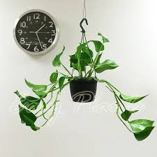 Grow Lamps For House Plants by Types Of Indoor Plants Gardening Know How Why Do My Indoor Plants
