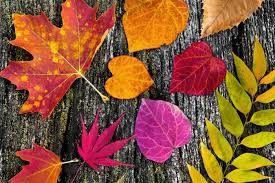 Wood Autumn Colorful Fall Leaves Wallpaper For Desktop