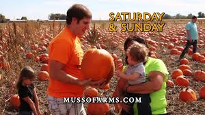 Pumpkin Patches In Colorado Springs 2014 by Musso Farms Pumpkin Patch 2014 Youtube