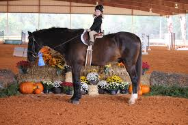 Double Rainbow Farm Autumn Hills Farm Pin By 21 Days Diet Plan On Horses Pinterest Horse Hunter Hunters Jumpers Equitation Equestrian Hillmar Farm Welcome Beckett Run Inc About Us News Alabama Association Corrstone Huntjumper Traing Barn In Modesto And Saratoga Holiday Giving Equestrian Style The Peeps Foundation Is The 744 Best Hunter Jumpershow Jumping Images Florida Jumper Show Barns Med Kennedy Grove Stables Tommi Clark Chosenbrook Show Jumper Sale