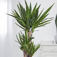 ungiftige zimmerpflanzen diese 11 arten sind harmlos