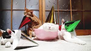 Happy Birthday Party Cat GIF