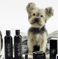 Do Morkies Shed A Lot by Hunde Wellness Mobile Grooming