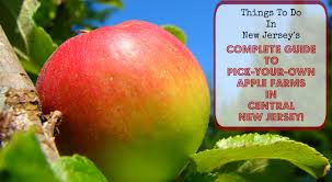 Nj Pumpkin Picking by The Complete Guide To Pick Your Own Apple Farms In Central New