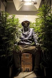 cannabis anbau in der wohnung kein verbrechen