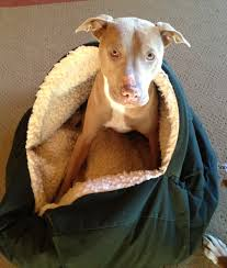 Burrowing Dog Bed by Cra Cra For Cozy Caves The Unexamined Dog