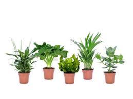 5x plant luftreinigende zimmerpflanzen s