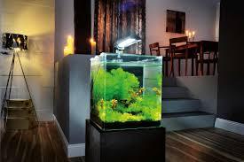 aquarium zu hause bringen sie die bunte unterwasserwelt in