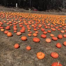 Half Moon Bay Pumpkin Patch 2017 4 c u0027s pumpkin patch 37 photos u0026 15 reviews farmers market