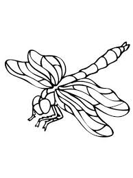 Dragonfly Coloring Pages Page Mandala