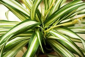 ungiftige zimmerpflanzen für katzen 44 pflanzen für ihre