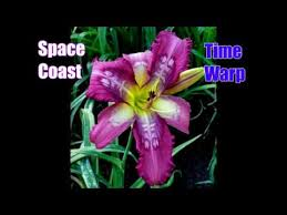 Most Exotic Flowers Cold Hardy Plant Seeds On The Planet Shipping WORLDWIDE Right Now Rare
