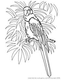 Sheets Tropical Coloring Pages 56 In Print With