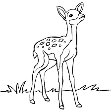 deer clipart black and white 6