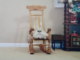 A Child-Sized Rocking Chair For A Kitten-Sized Cat - Imgur