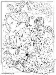 Sea Turtle Coloring Pages For Kids Ocean Creatures