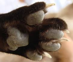 how to cut a cats nails why do i need to trim my cat s claws